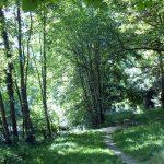 Wassertreten oder Kneippen und Erholung am Pfannwaldsee