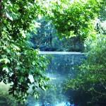 Verschwörung erwünscht Teil 2 – Illegale Aktivitäten am Pfannwaldsee