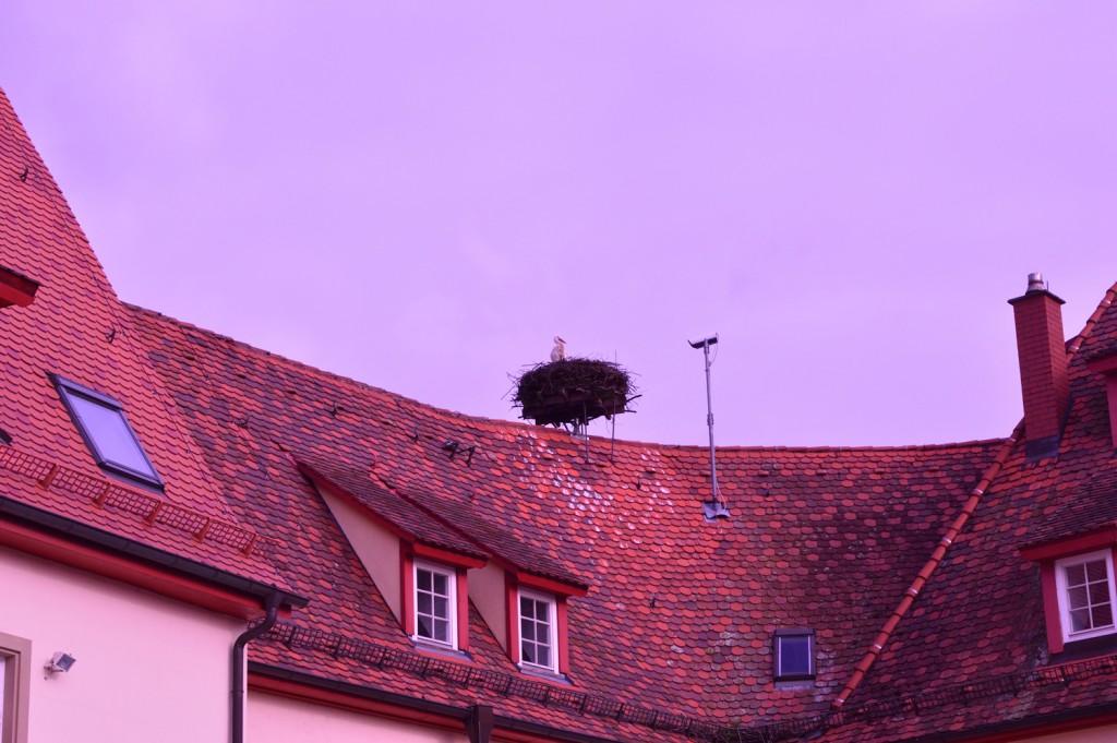 storch-unteröwisheim3