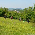 """Tageswanderung """"Kraichgauer Hügelsteig"""" am 21. Juni 2015"""