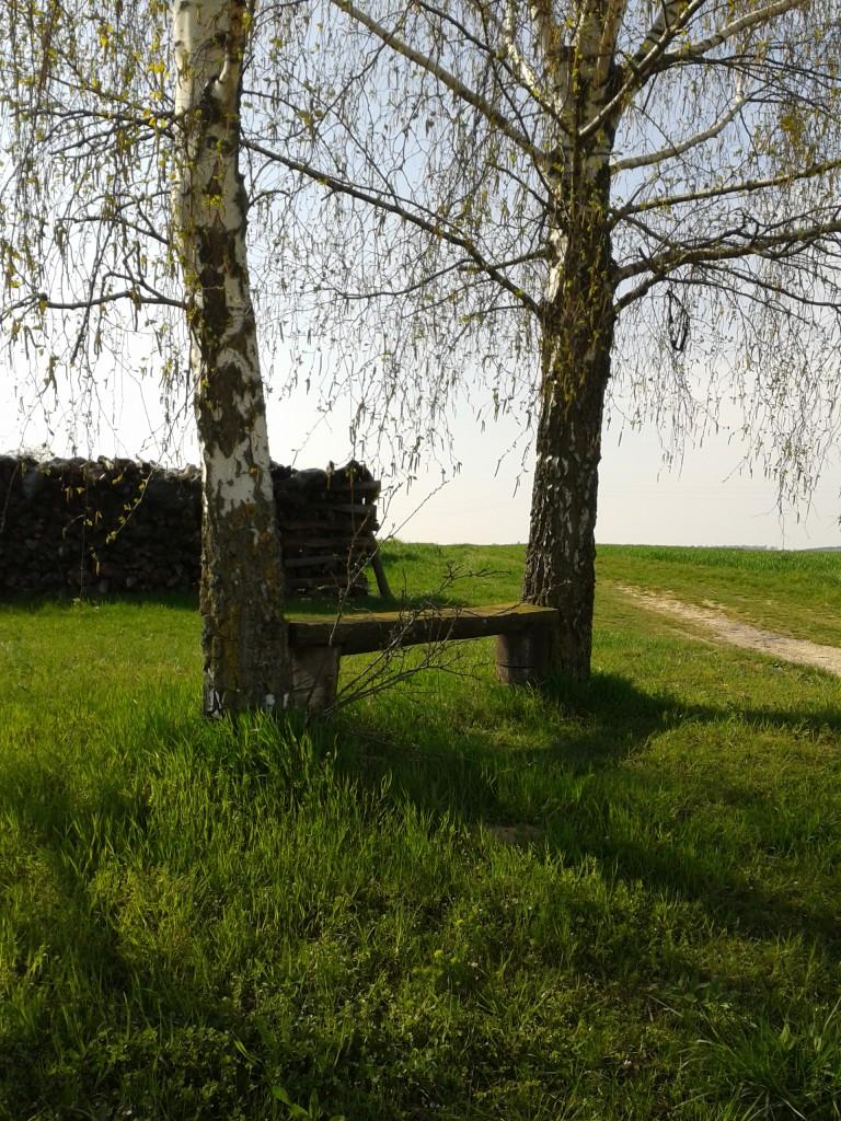 Birkenbänkchen zwischen Oberöwisheim und Neuenbürg
