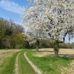 Kleiner Wengert-Spaziergang im Frühling