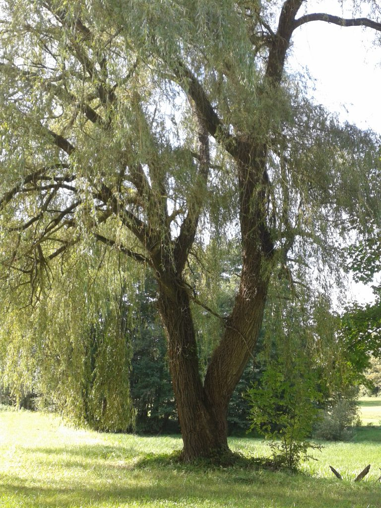 frueher-herbst-in-kraichtal-spaziergang-entdecke-kraichtal-10