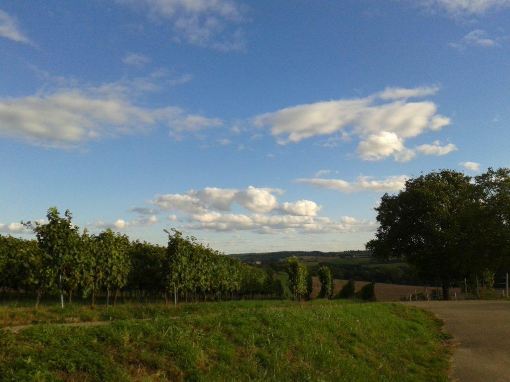 frueher-herbst-in-kraichtal-spaziergang-entdecke-kraichtal-12