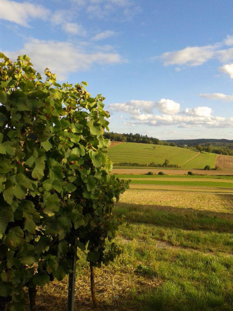frueher-herbst-in-kraichtal-spaziergang-entdecke-kraichtal-15