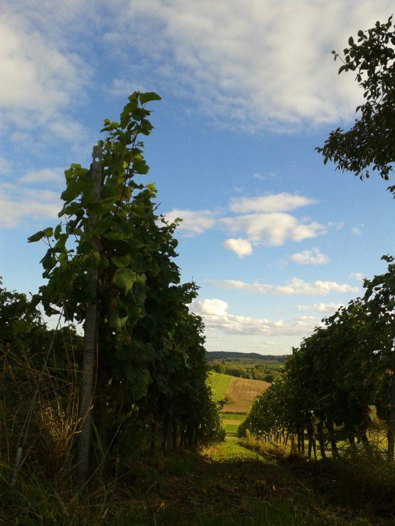 frueher-herbst-in-kraichtal-spaziergang-entdecke-kraichtal-16