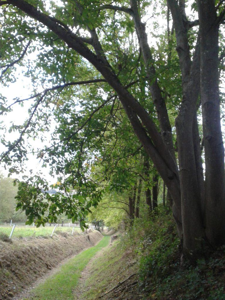 frueher-herbst-in-kraichtal-spaziergang-entdecke-kraichtal-31
