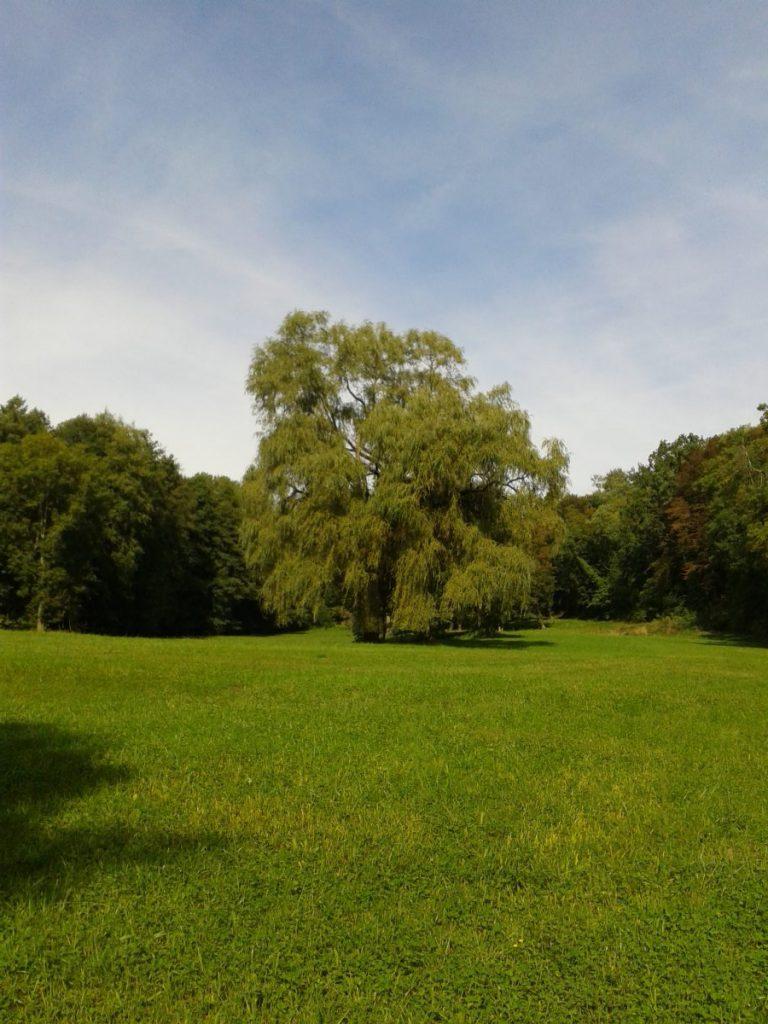 frueher-herbst-in-kraichtal-spaziergang-entdecke-kraichtal-7