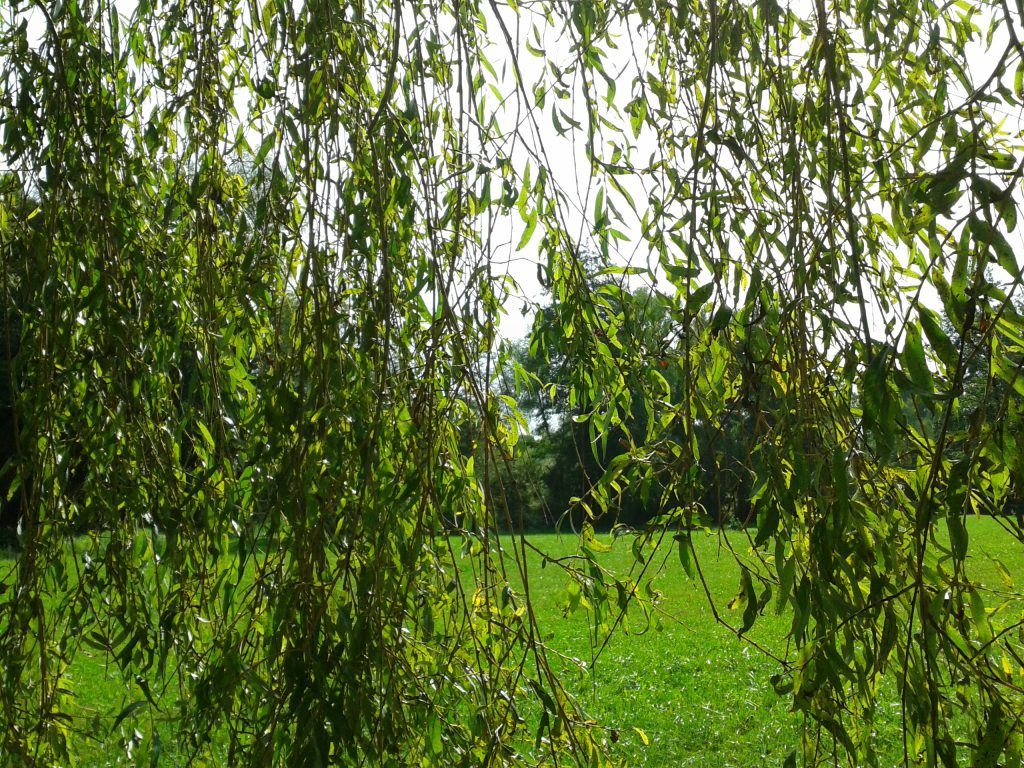 frueher-herbst-in-kraichtal-spaziergang-entdecke-kraichtal-8