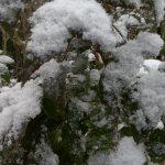 Der erste Schnee und meine unbequeme Meinung über den Klimawandel
